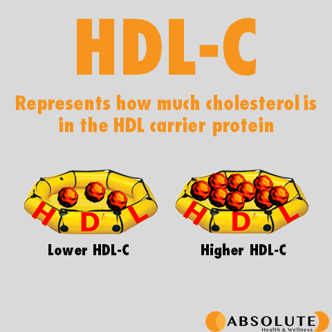 Diagram explaining HDL-C and how much cholesterol is in the HDL carrier protein, meaning whether you have lower or higher HDL-C