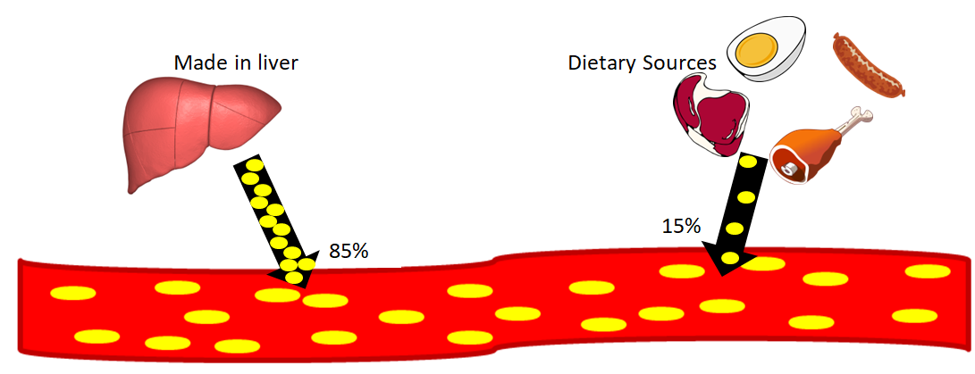 Picture of sources of cholesterol in the blood. 85% of cholesterol is made in the liver and 15% comes from dietary sources such as eggs and meat