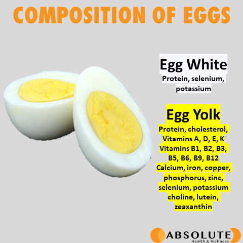 Hardboiled egg depicting the composition of eggs. Egg whites have protein, selenium, and potassium while egg yolks have protein, cholesterol, and various vitamins and minerals