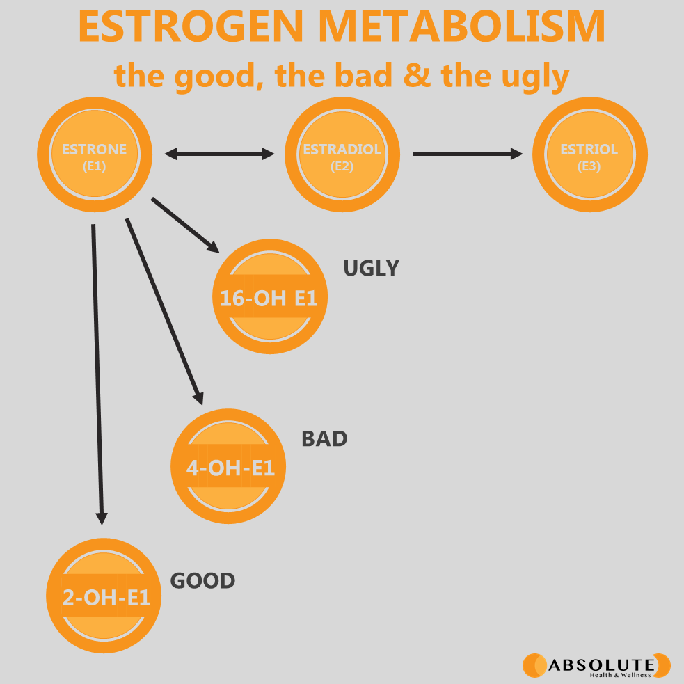 diagram explaining estrogen hormone metabolism showing the different forms of estrone, the good and the bad ones.