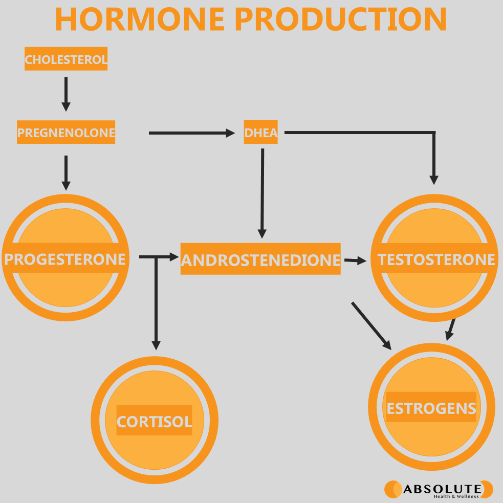 schematic diagram showing the metabolism of cholesterol into various hormones including progesterone, cortisol, testosterone, and estrogen