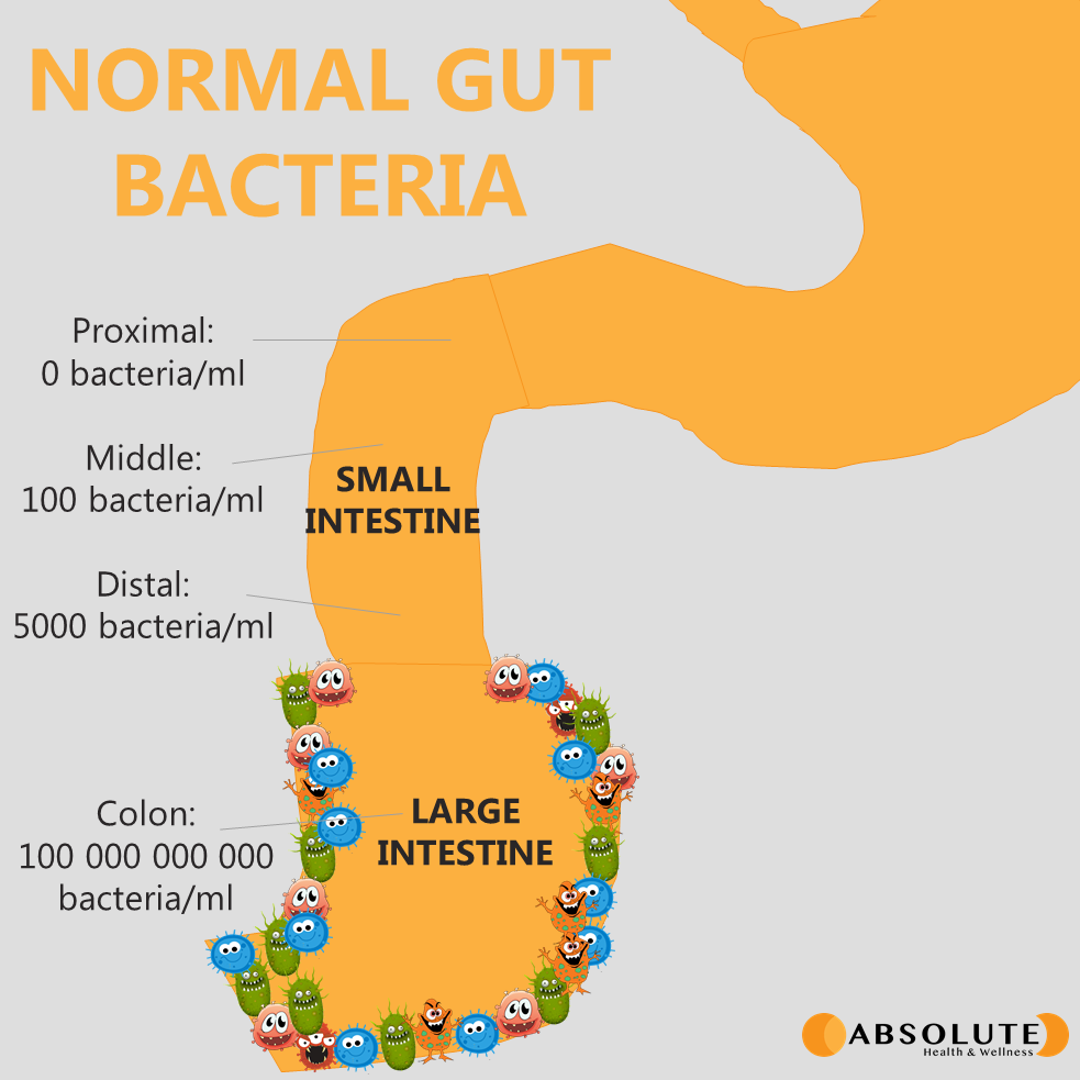 Diagram of the digestive tract showing normal gut bacteria populations in the small intestine versus the large intestine
