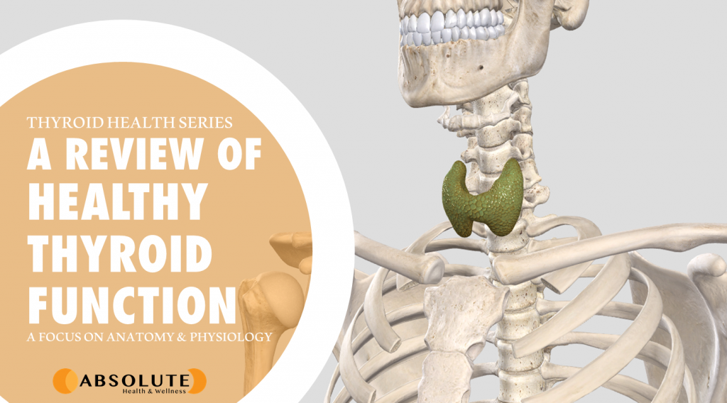 Skeleton with thyroid gland and text bubble saying a review of healthy thyroid function: anatomy and physiology