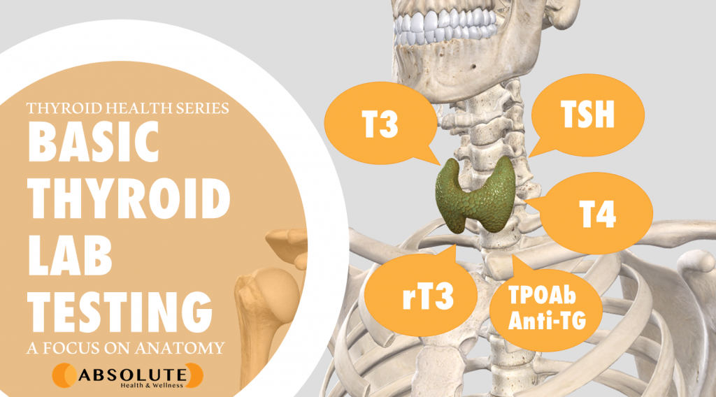 Skeleton with thyroid gland superimposed and labelled with T3, T4, TSH, rT3, and TP0Ab Anti-TG and text bubble reading Basic Thyroid Lab Testing