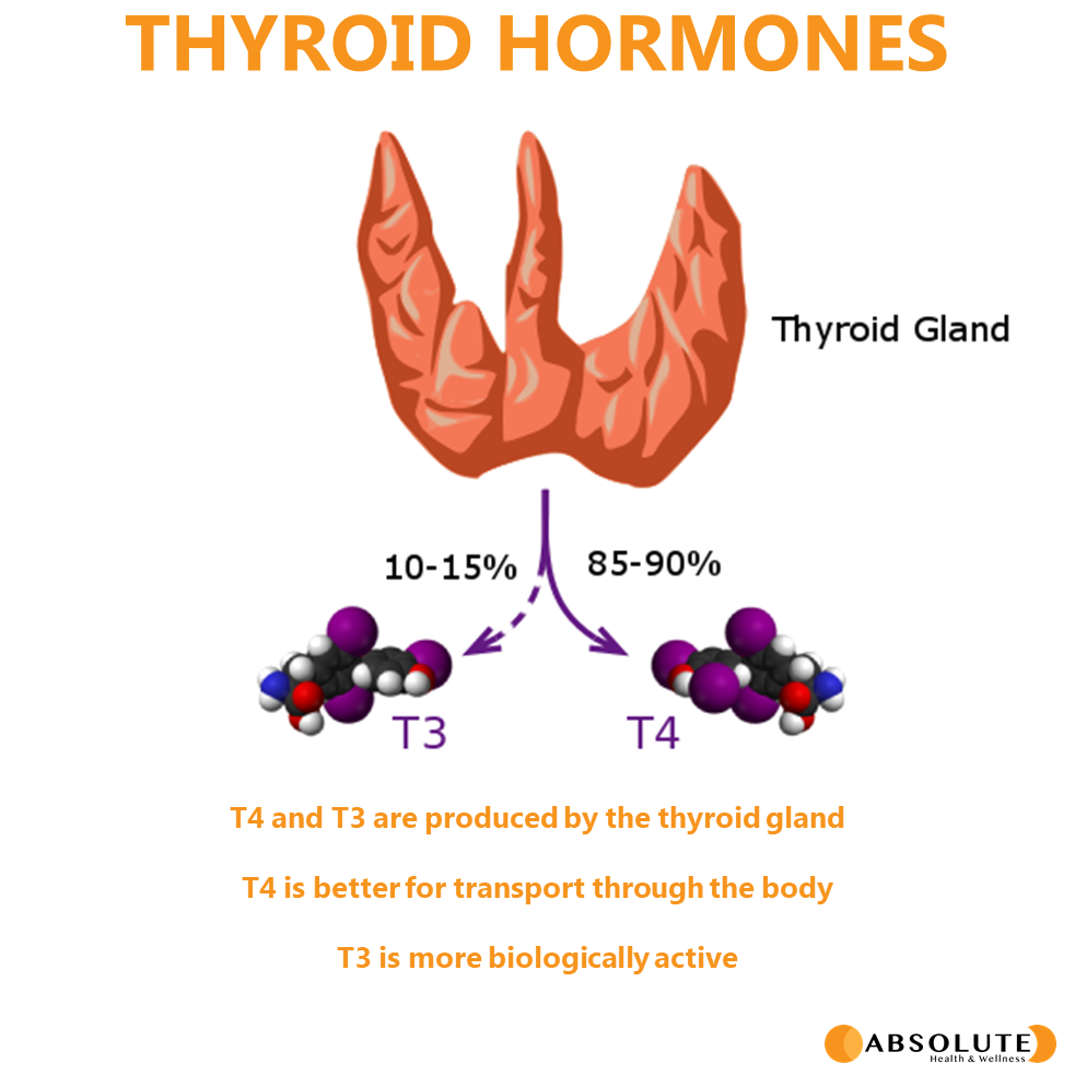 a thryroid gland with T3 and T4 hormones being released