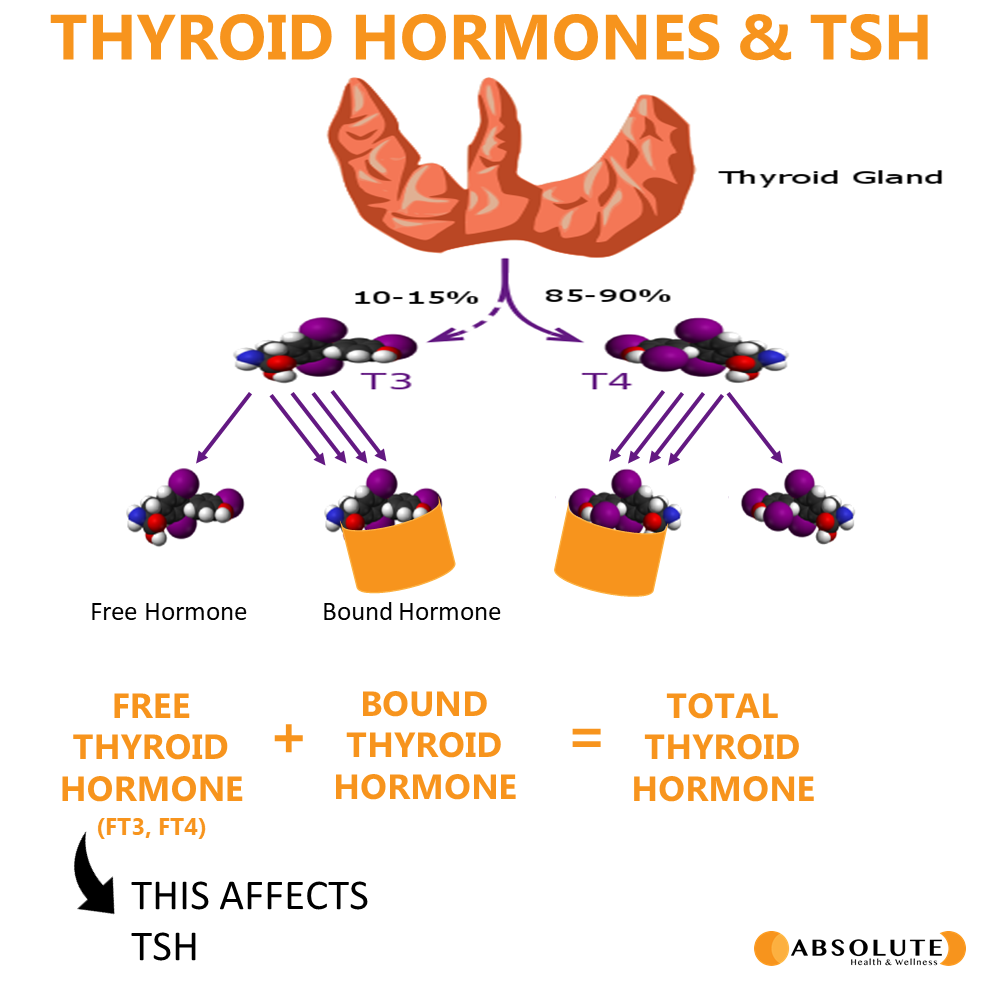 schematic showing thyroid anatomy and the effects of free thyroid hormone and TSH when interpreting results of thyroid lab testing