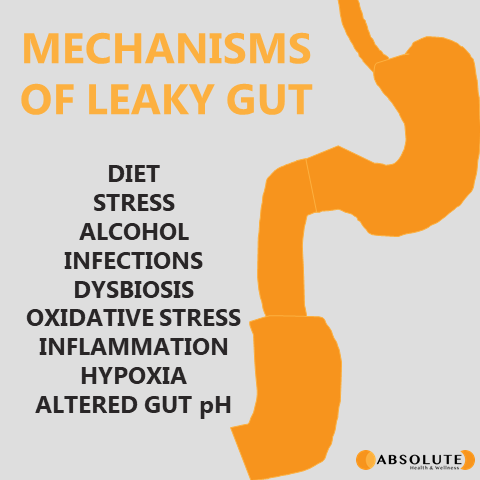 graphic with digestive system showing the mechanisms of leaky gut, including diet, stress, alcohol, infections, dysbiosis, oxidative stress, inflammation, hypoxia, and altered gut pH
